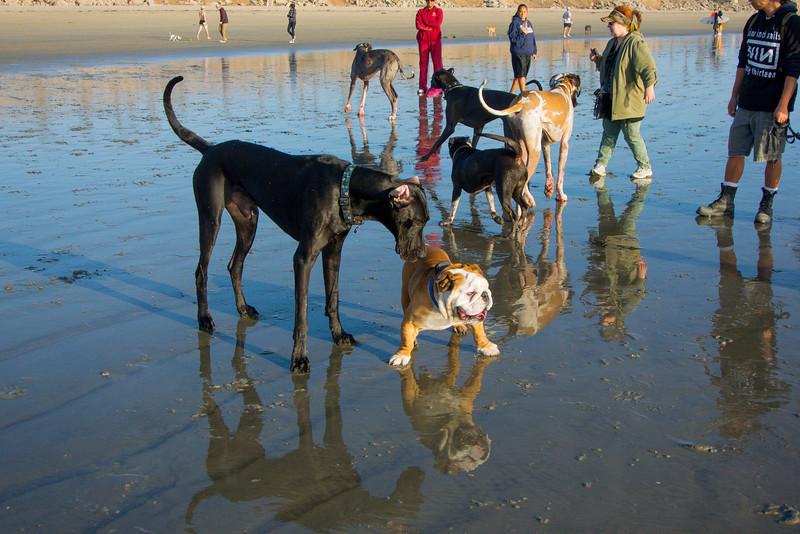 dogs_beach-28.jpg