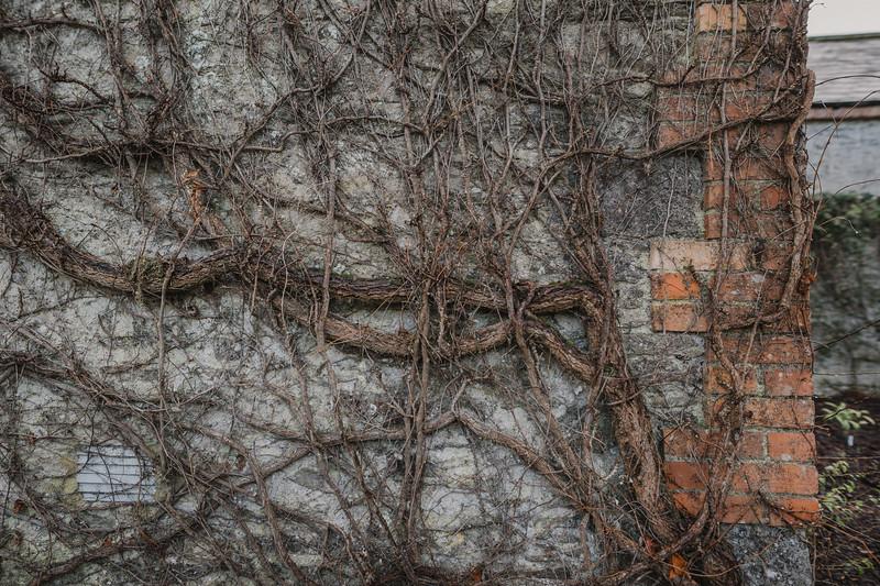 Wyndham at Blarney_0145.jpg