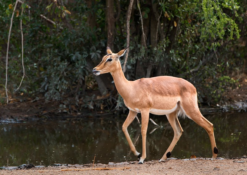 2014-08Aug-Thornybush Masters-59-Edit.jpg