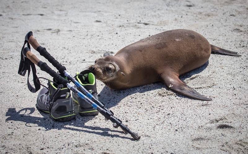 Galapagos_MG_4910.jpg