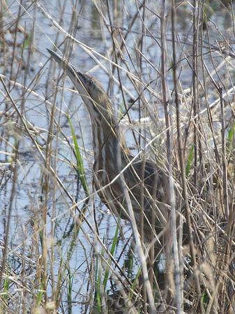 2019-04-16 Riverlands Migratory Bird Sanctuary
