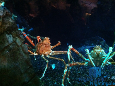 Staats Kulig Aquarium