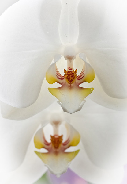 The_Sorcery_of_Orchids_2011-2.jpg