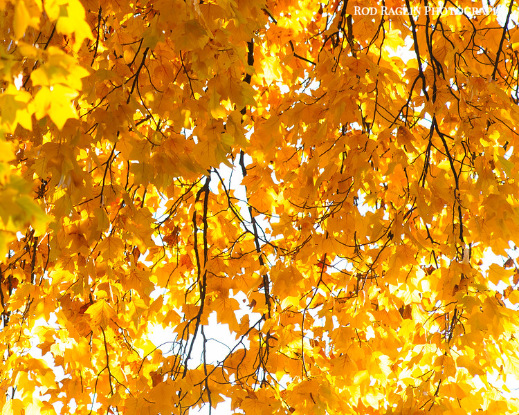 Leaves, limbs, light