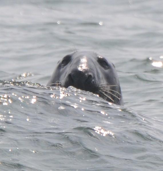 bird,seal,family 006.JPG