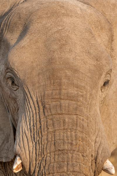 Namibia E4A4791.jpg