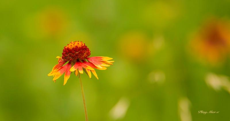 Flower_DWL0394.jpg