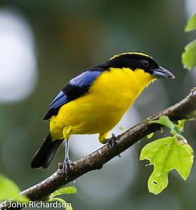 Ecuador - Northern -2013