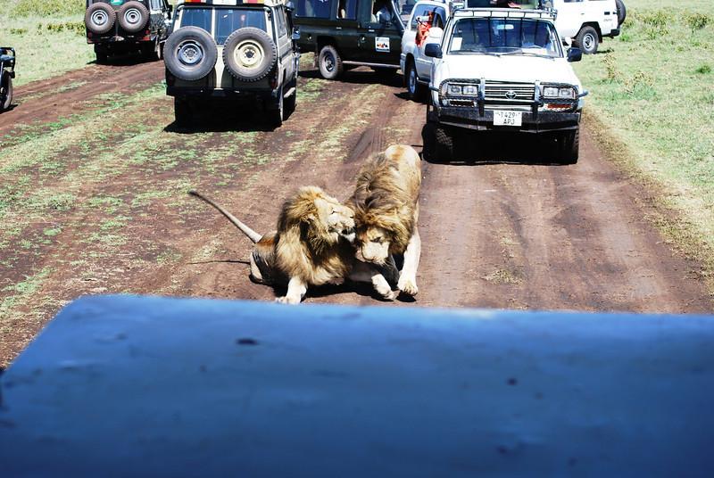 Ngorongoro (138).JPG