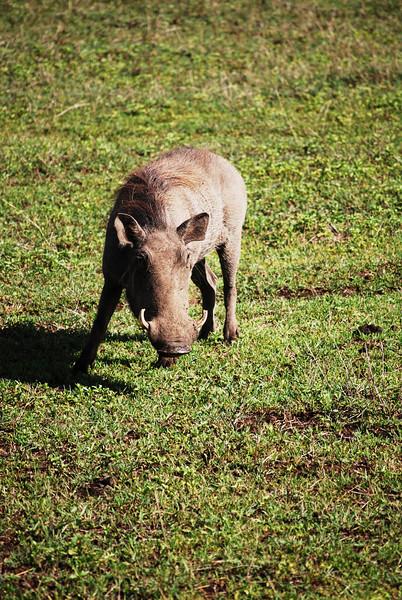 Ngorongoro (46).JPG