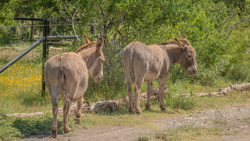 donkey 1_DWL9596.jpg