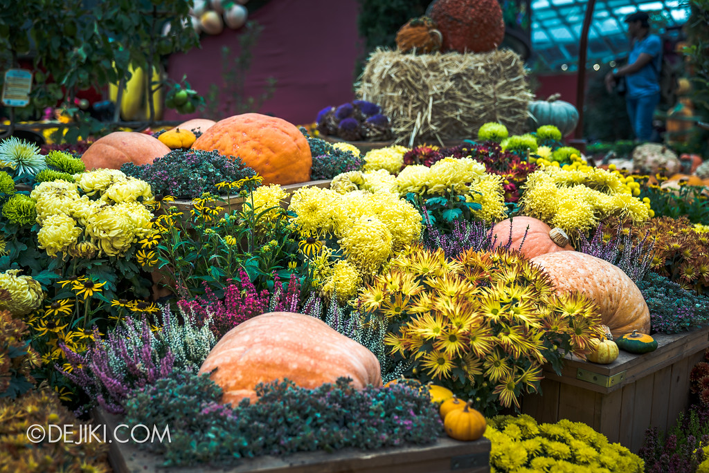 Gardens by the Bay - Autumn Harvest Floral Display - Pumpkin and flowers