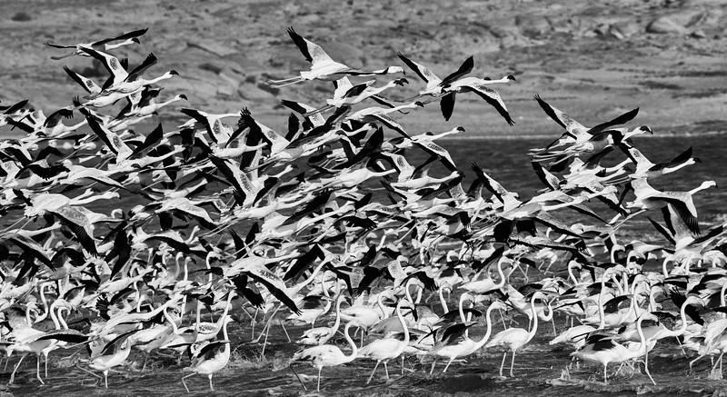 DSC_1044 Flamingos.jpg