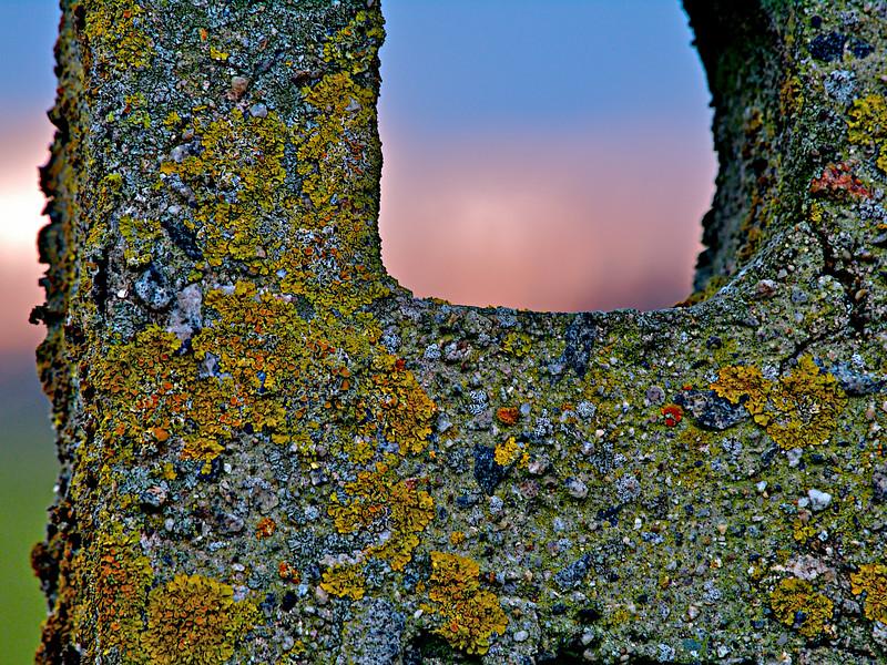 Gjerdestolpe - godt besmykket fra naturens side. På veien til Borestranda. The same fencepost - giftet by the jewels of nature. On the road to Bore Beach. (Foto: Geir)