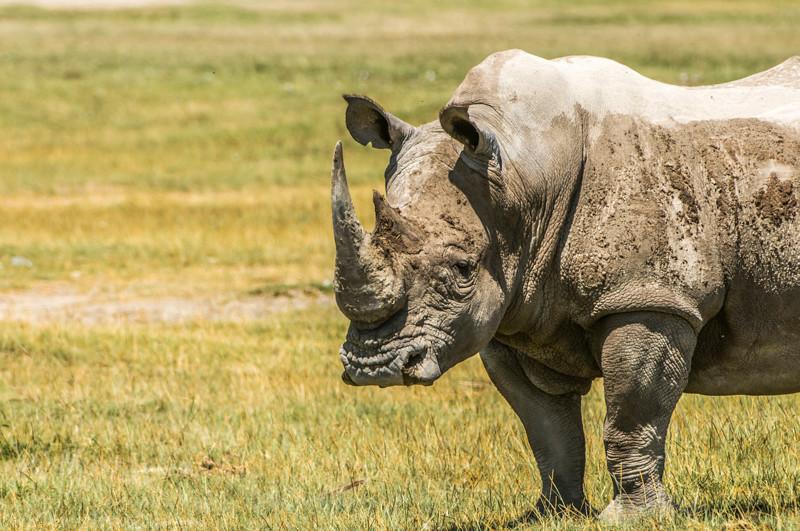 Rhinos-6.jpg