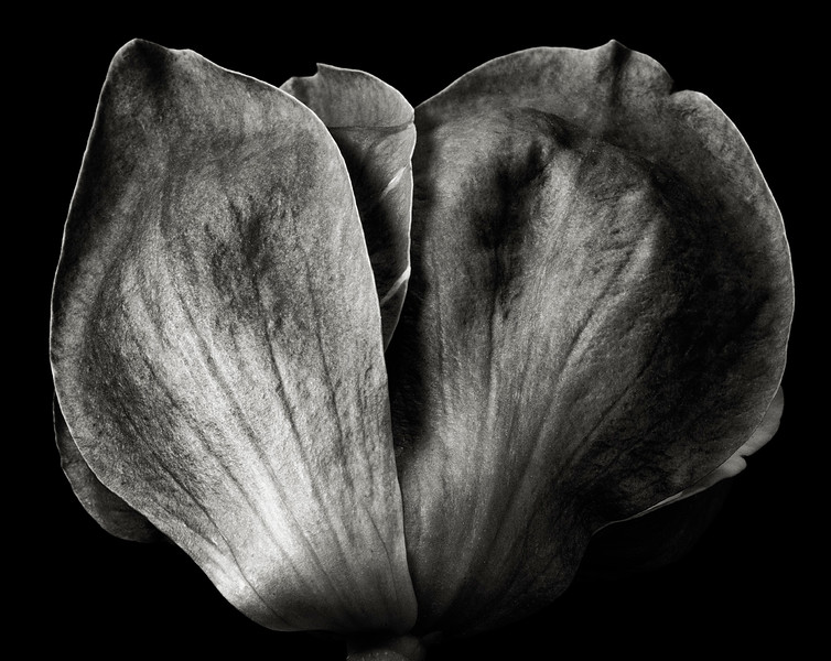 magnolia-09.jpg