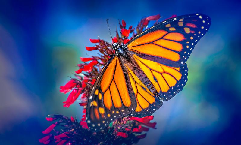Butterfly-143.jpg