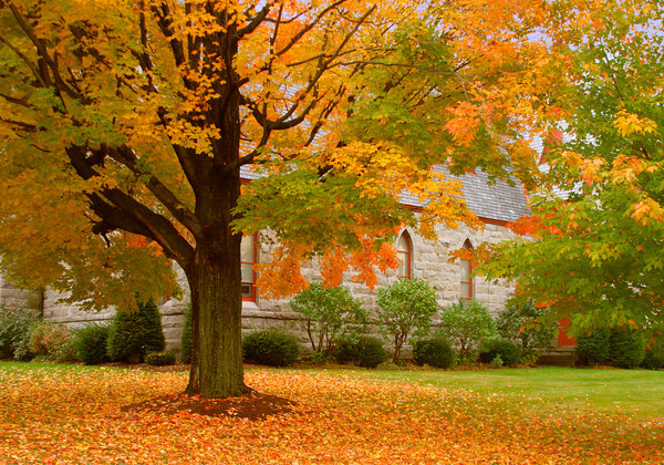 Autumn Foliage in Front of a Church