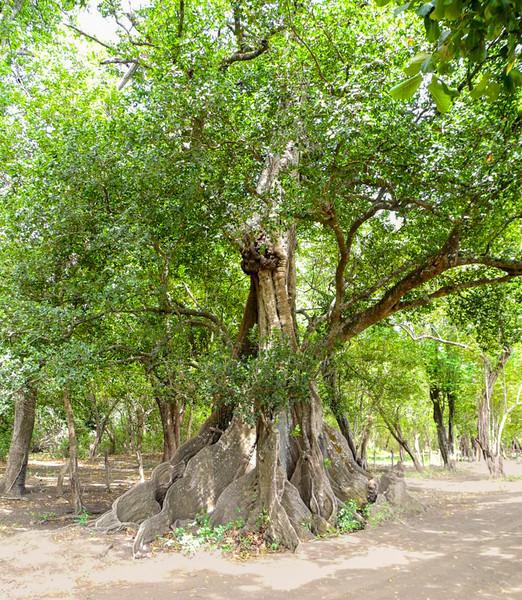 Costa Rica_Tree_Velvet-5.jpg