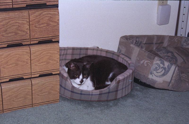 2003 12 - Cats 58.jpg