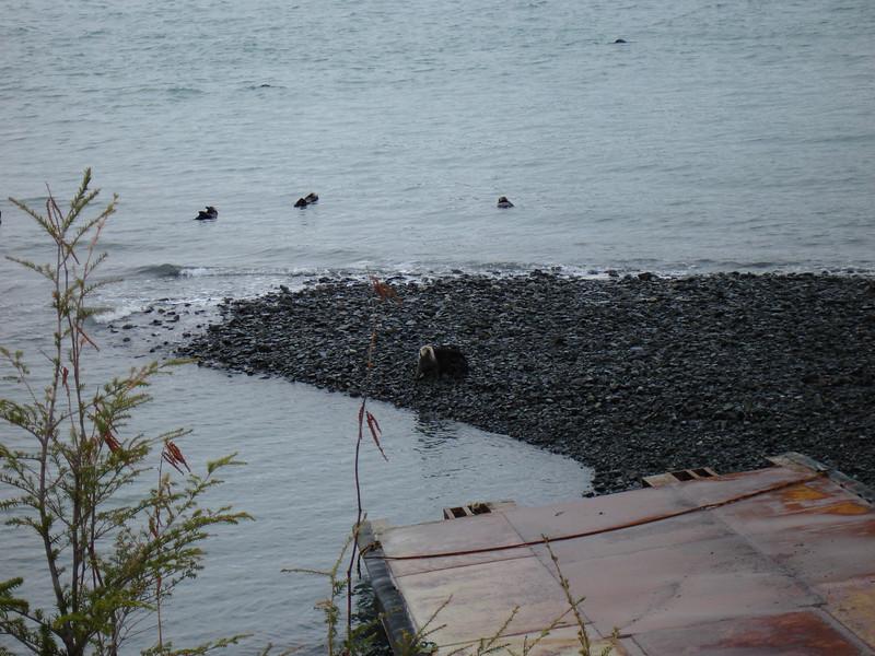 Alaska 2008 024.jpg
