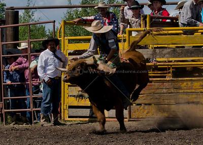 Bulls Sunday 2012