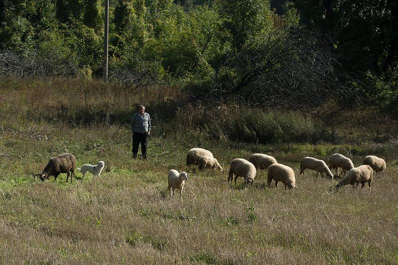 sheepsman2.jpg