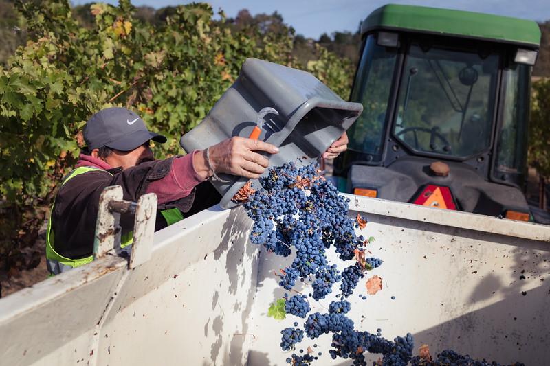 Mendo-Harvest-Beckstoffer-13.jpg
