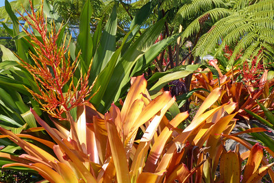 Brilliant Bromeliad January 2013, Cynthia Meyer, Hawaii