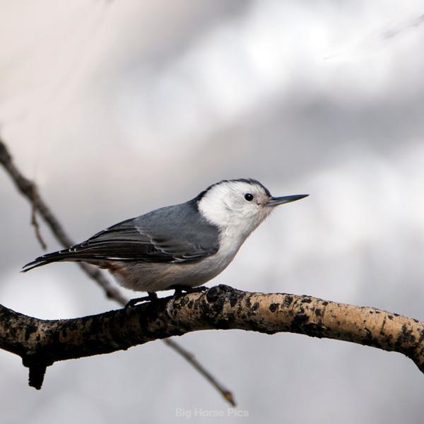 Tell bird 4.jpg