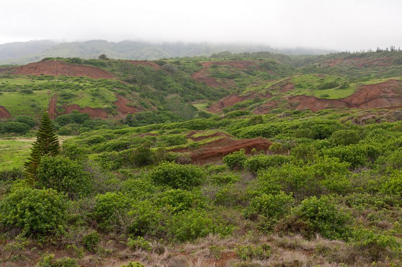 Lush mountains in Lanai, Hawaii