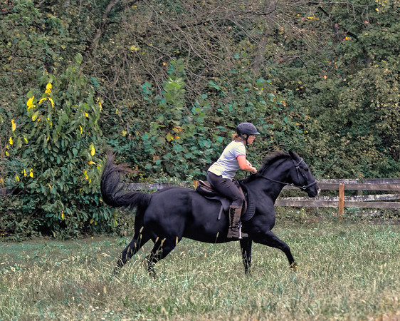 horse farm photos