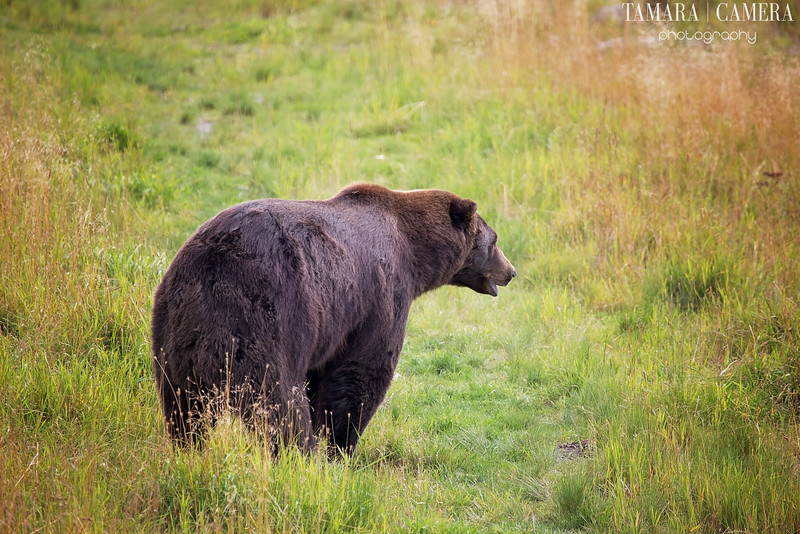 Bear3-2-2.jpg