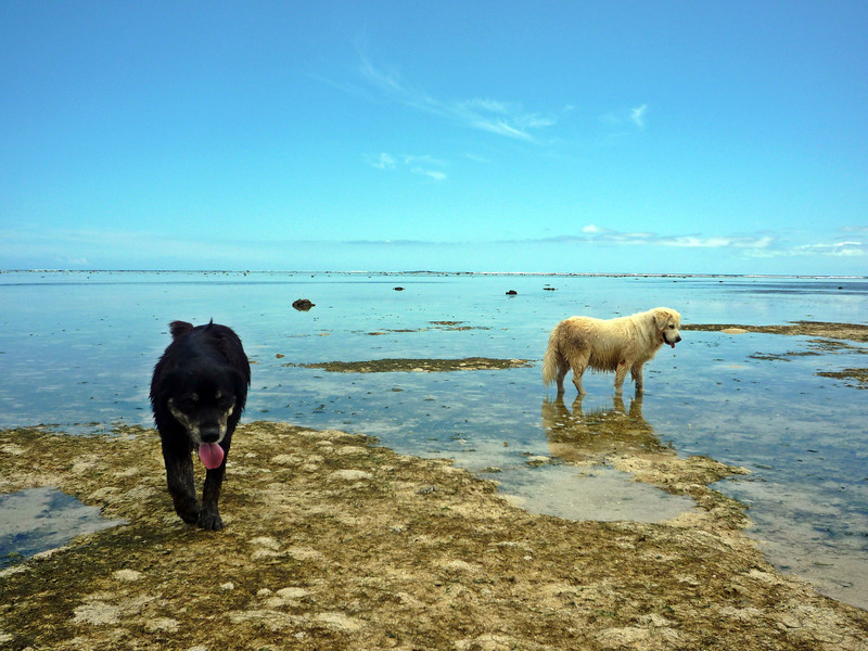 fiji reef dogs.JPG