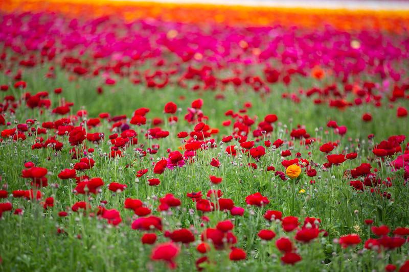 Spring Flowers B-346.jpg