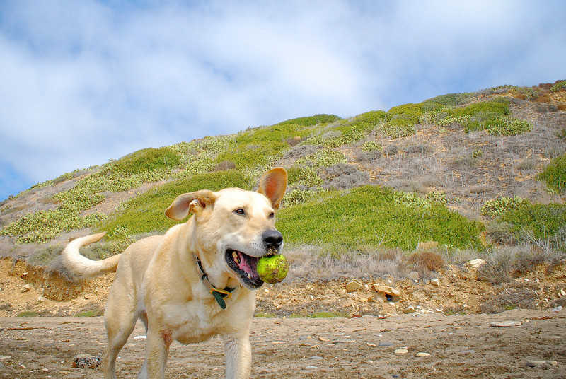 dogs_beach-078.jpg