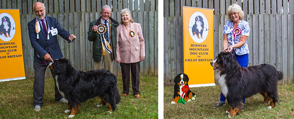 Best Veteran in Show & 1st Veteran Dog