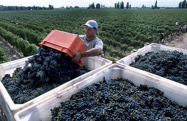 Noticias sobre el vino y el malbec argentino