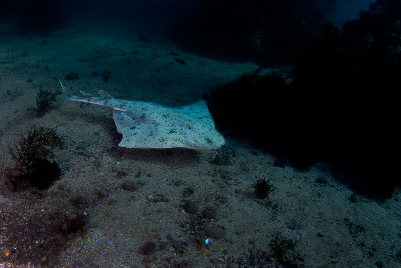 john bleidorn