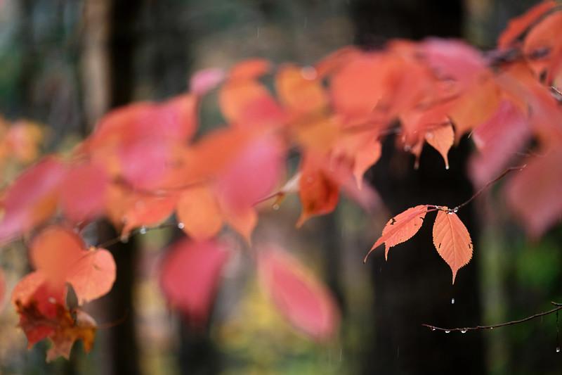 Autumn raindrops at Lake Anne
