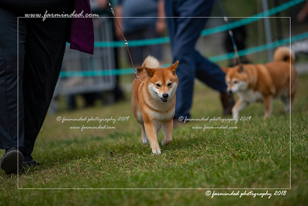 July 2018, All Breed Dog Show - C.I.K.C