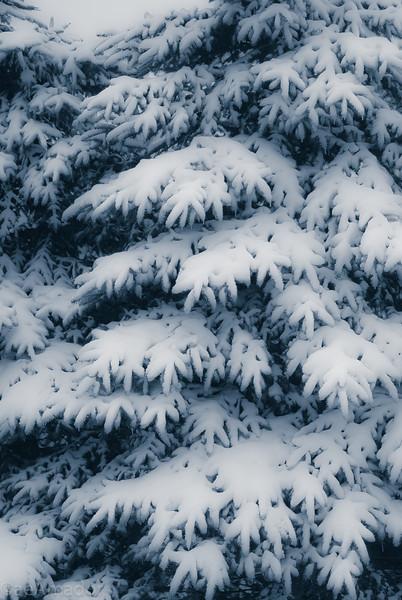 Winter Wonderland in Vermont-18.jpg