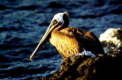 Galapagos Birds - Nov 2002