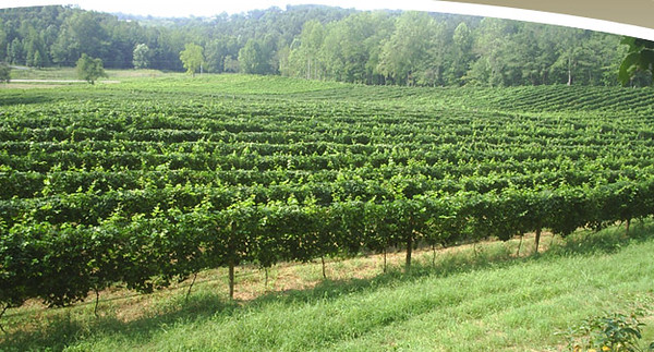 Cartecay Vineyards