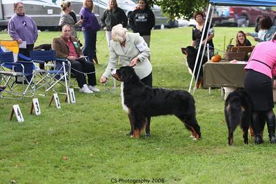 Puppy 12-18mo Dog