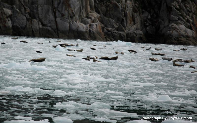 Alaska Kenai Fjords0086.JPG