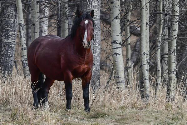 11-2-16 Ab. Wildies - Stallions Deer Flats