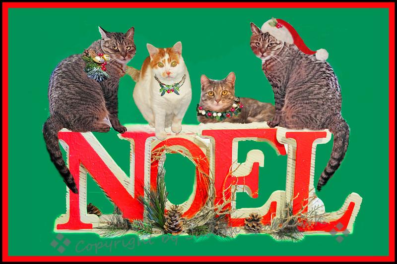 Have a Very Kitty Christmas - Judith Sparhawk
