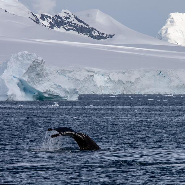 2019_01_Antarktis_03635.jpg