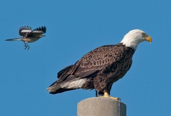 Palm Eagle Nest - Oct 5, 2010